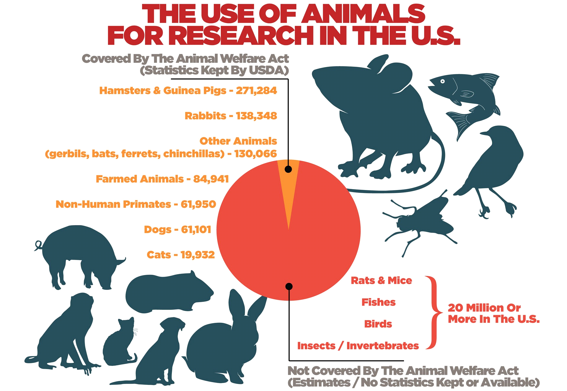 animal test 11