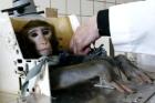 animal test 12