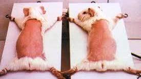 animal test 123