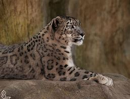 big cats zoo