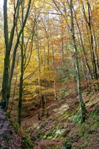 belgian woods