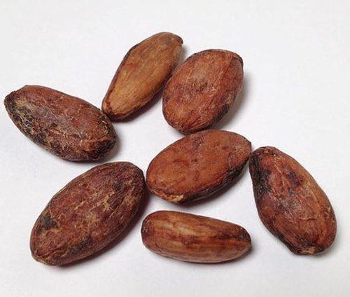 Bildergebnis für cocoa bean